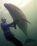 find out about the amazing underwater world, from Dolphin Man, Tony Crabtree